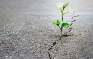41537383-white-flower-growing-on-crack-street-soft-focus-blank-text-Stock-Photo